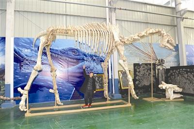 崇州天演博物馆馆长王小兵向记者介绍巨犀化石的修复情况